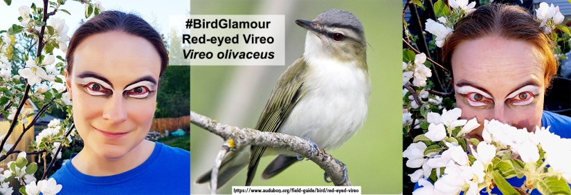 Red-eyed Vireo small