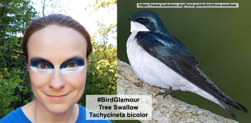 Tree Swallow Bird Glamour