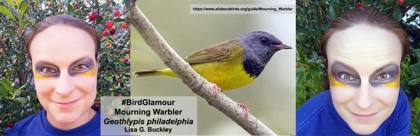 Mourning Warbler complete