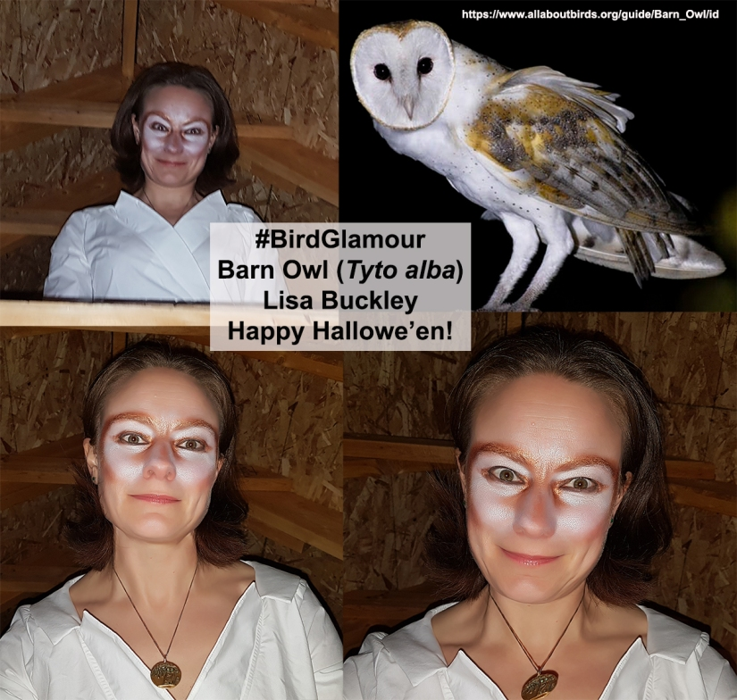 Barn Owl Bird Glamour Oct 31 2018