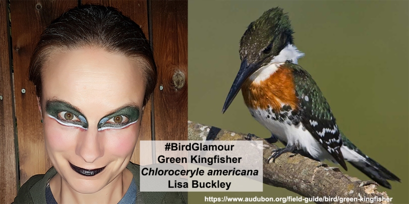 Green Kingfisher Bird Glamour