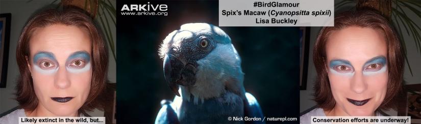 Spixs Macaw Bird Glamour