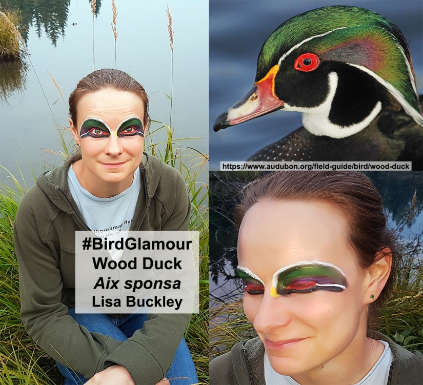 Wood Duck Bird Glamour