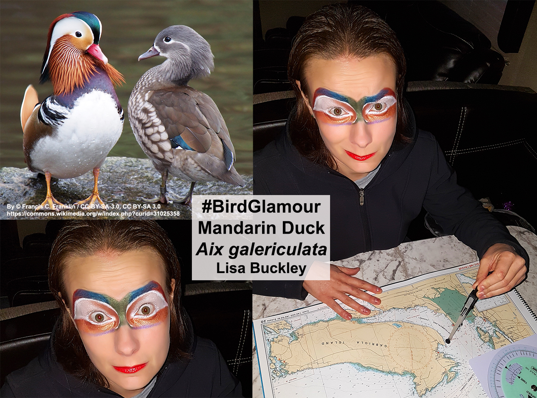 Mandarin Duck Bird Glamour