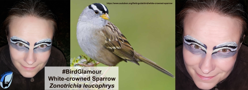 White-crowned Sparrow Bird Glamour 2018-11-23