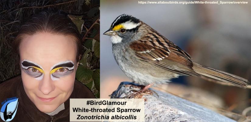White-throated Sparrow Bird Glamoour
