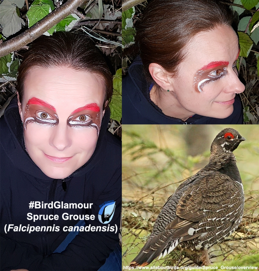 Spruce Grouse Bird Glamour