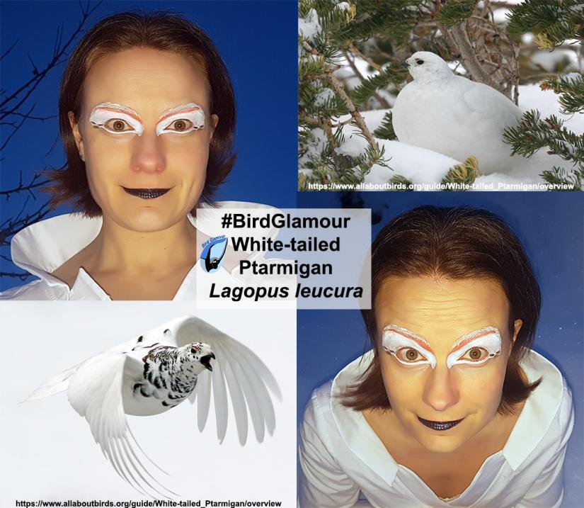 white-tailed ptarmigan bird glamour