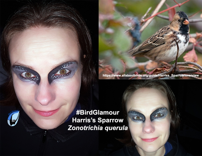 Harris's Sparrow Bird Glamour