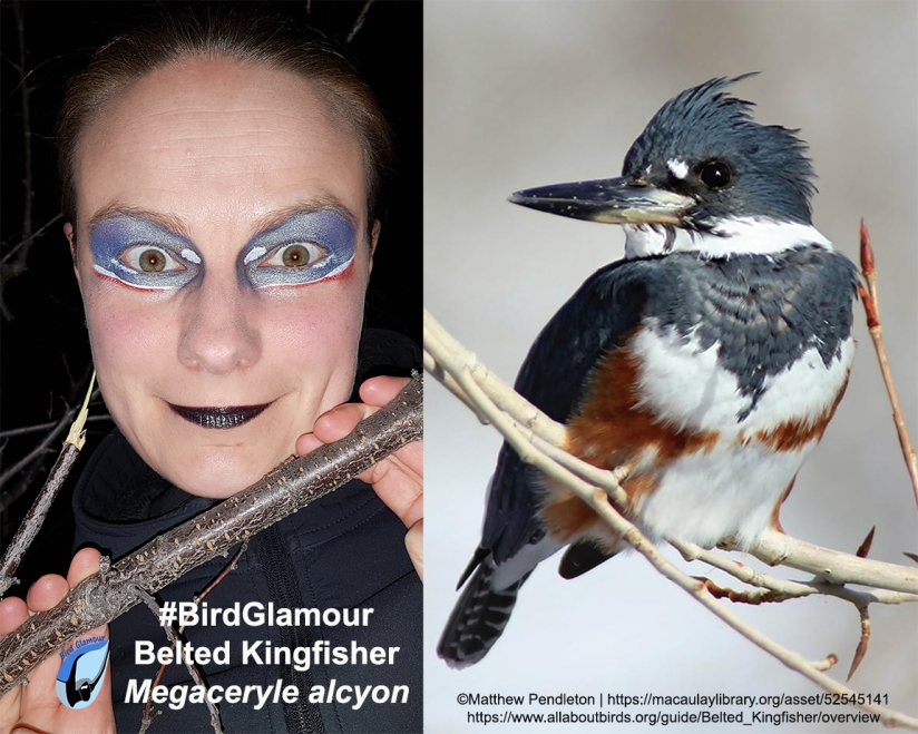 Belted Kingfisher Bird Glamour