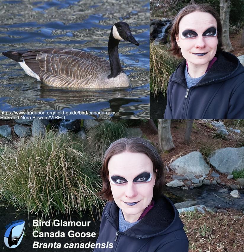 Canada Goose Bird Glamour