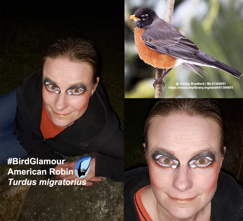 American Robin Bird Glamour