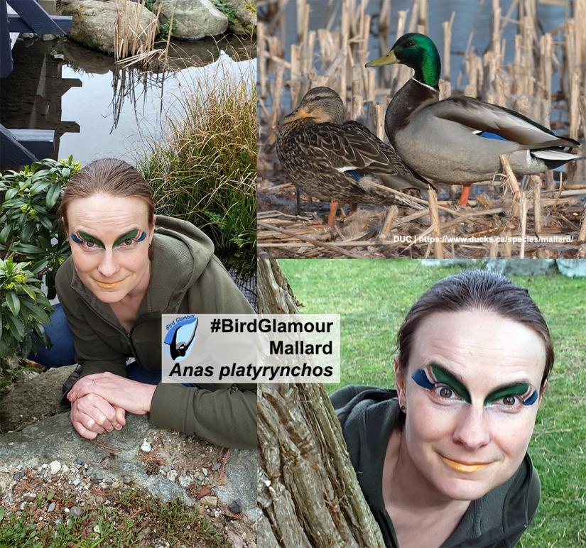 Mallard Bird Glamour