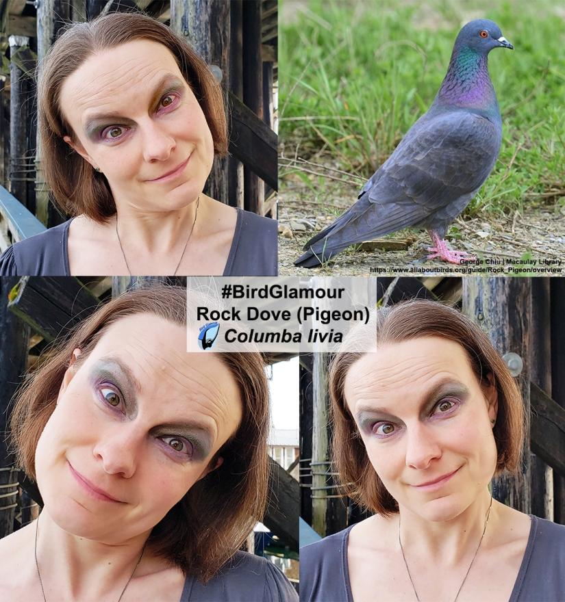 Rock Dove Bird Glamour