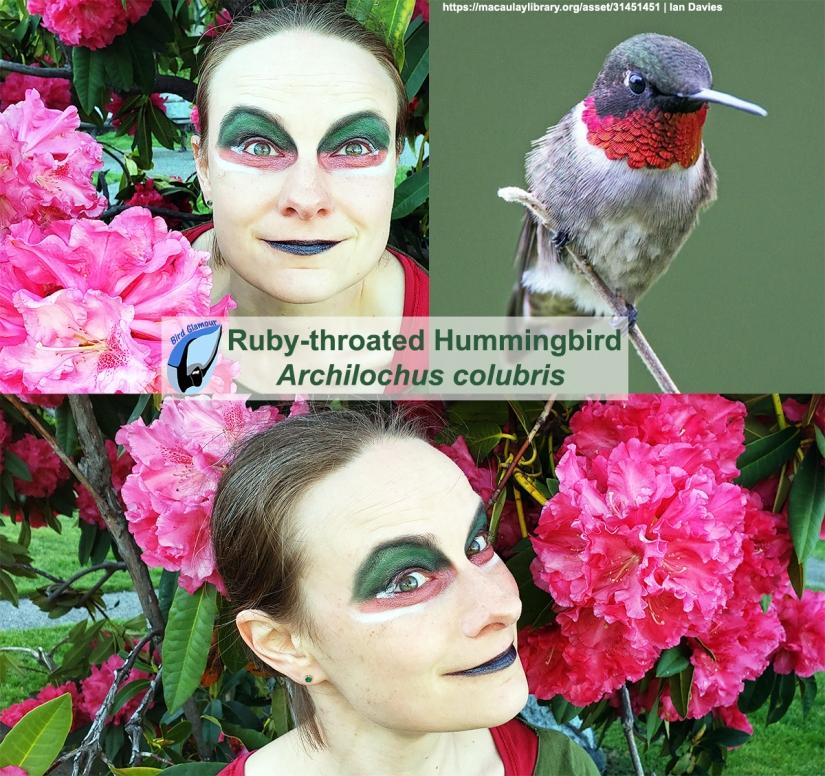 Ruby-throated Hummingbird Bird Glamour.jpg
