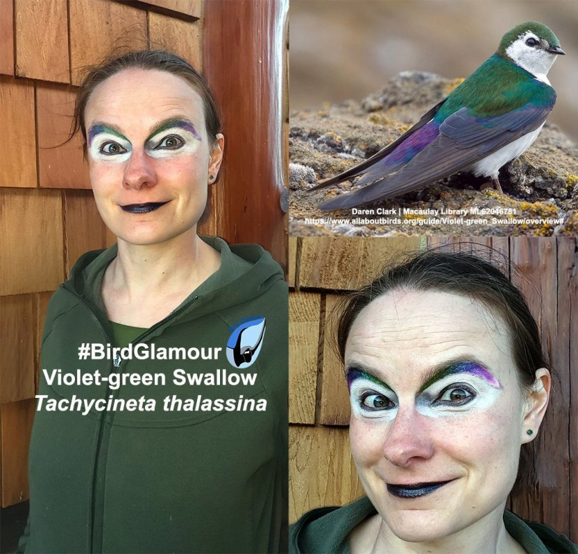 Voilent green swallow.jpg