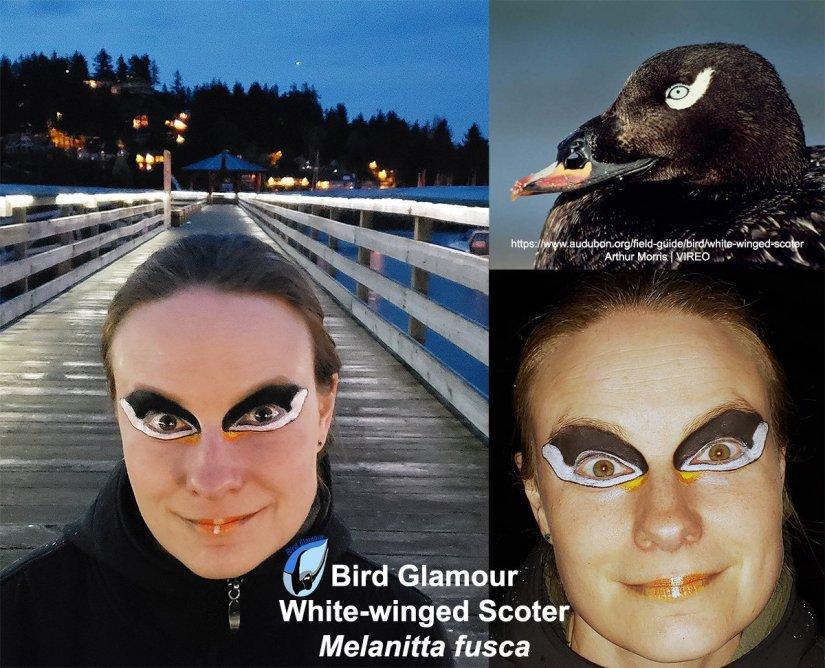 White-winged Scoter.jpg