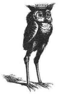 Blog: Birds In Mud – Lisa G  Buckley, Ph D