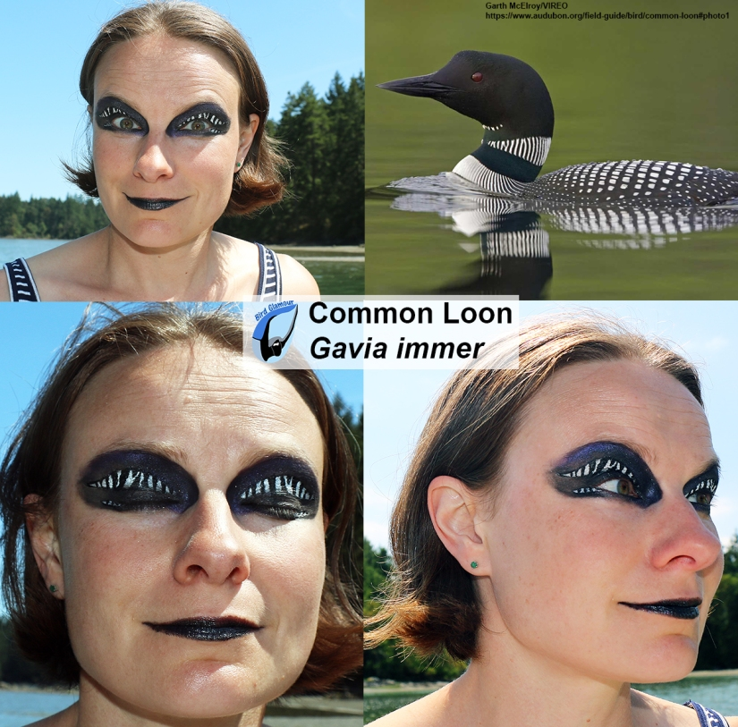 Common Loon Bird Glamour