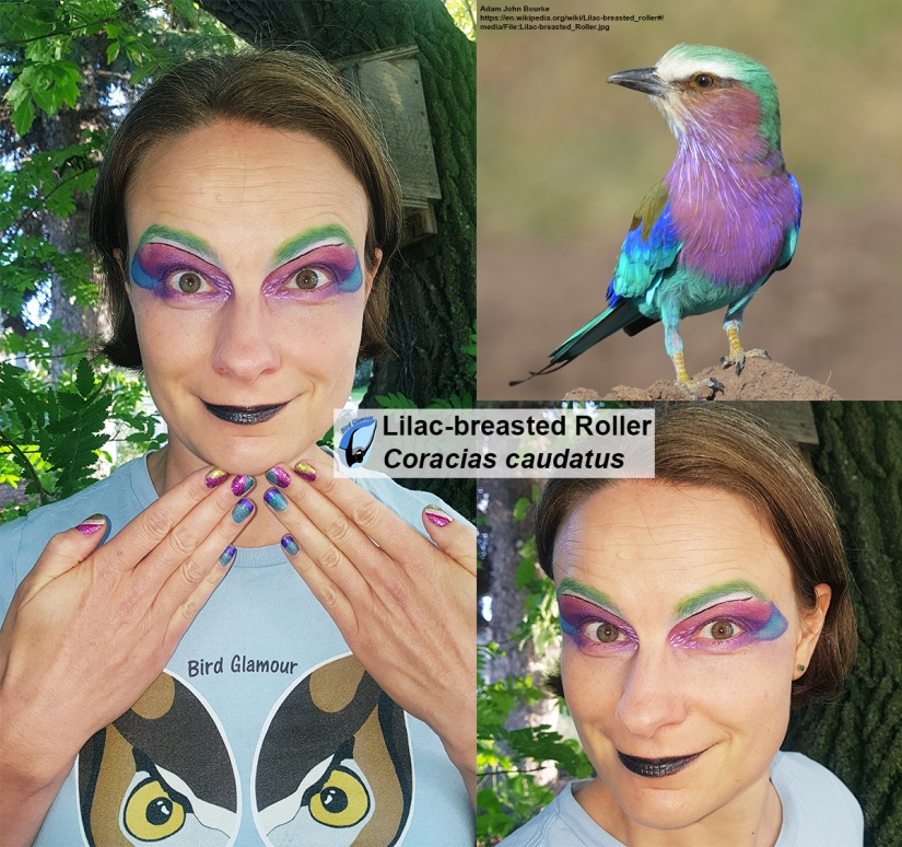Lilac-breasted Roller Bird Glamour