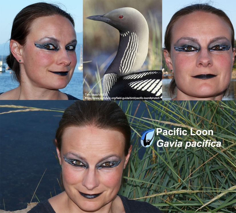 Pacific Loon Bird Glamour