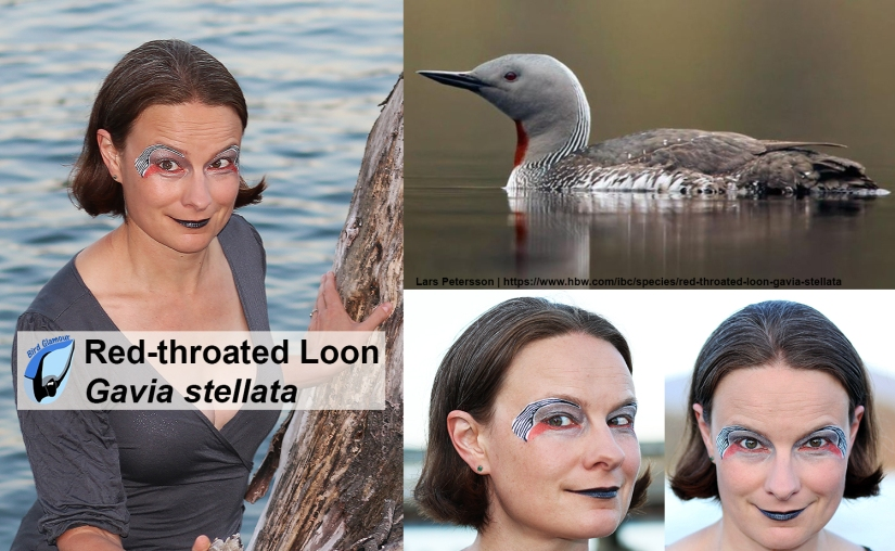 Red-throated Loon Bird Glamour