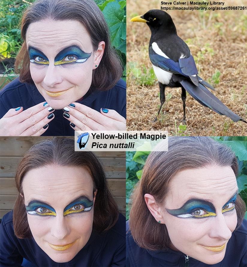 Yellow-billed Magpie Bird Glamour