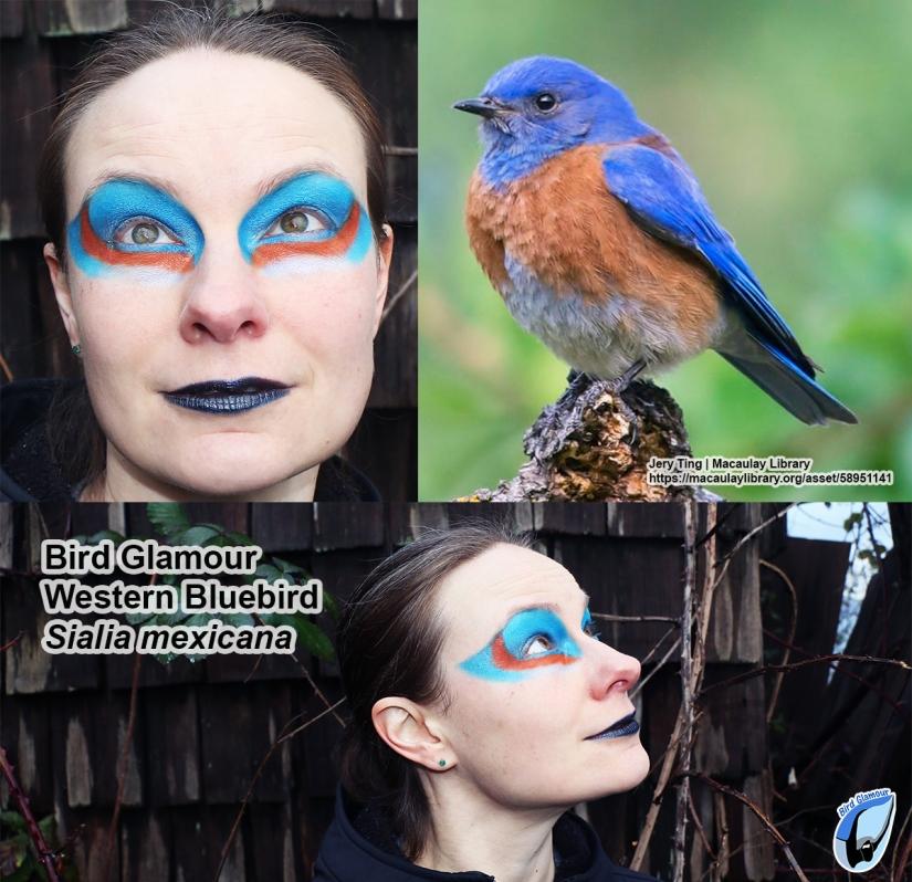 Western Bluebird Bird Glamour
